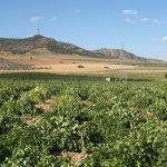 Valdepeñas, sede del XXI Congreso en Castilla-La Mancha